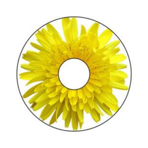 Blumen A-Nr. 004