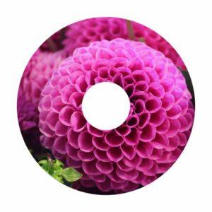 Blumen A-Nr. 019